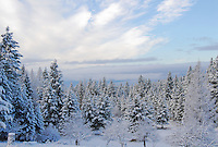 Whispy white clouds float in a blue sky over a snow laden forest in the Tobacco Valley Montana