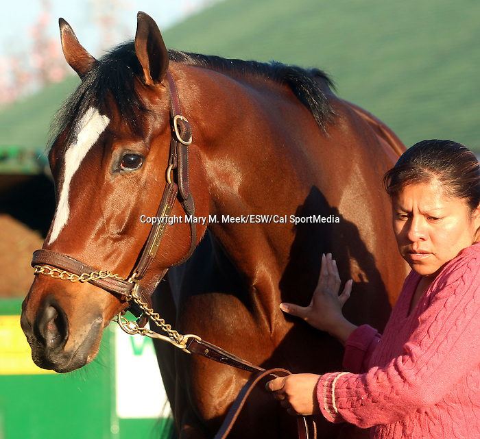 April 20, 2014 Untapable, current favorite for the Kentucky Oaks after her breeze at Churchill Downs. She is trained by Steve Asmussen and owned by Winchell Thoroughbreds.