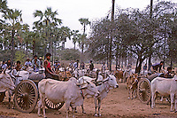 Ox Cart lining up to get water northern Myanmar during 1996 in the rural area near Bagan