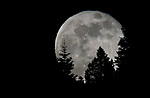 The Flower moon, the final supermen of 2020, rises near Woodfords, Ca. on Thursday, May 6, 2020. <br /> Photo by Cathleen Allison