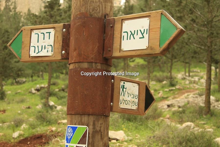Israel, Judea, Pisgat Ze'ev-Neve Yaácov community forest
