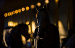 LOUISVILLE, KY - APRIL 29: Horses walk shed row in the morning light as Kentucky Derby week gears up at Churchill Downs on April 29, 2018 in Louisville, Kentucky. (Photo by Scott Serio/Eclipse Sportswire/Getty Images)