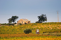 Vineyards in autumn colours yellow red with a vineyard tractor driving a small country track. Domaine la Monardiere Monardière, Vacqueyras, Vaucluse, Provence, France, Europe