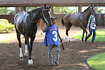 July 18, 2015: Delaware Handicap contenders Fortune Pearl (#3) and America (#2) walk in the paddock before the race. Sheer Drama, Joe Bravo up, wins the Grade I Delaware Handicap, one and 1/4 miles for fillies and mares 3 and upward at Delaware Park in Stanton DE.  Trainer is David Fawkes, owner is Harold L. Queen. Joan Fairman Kanes/ESW/CSM