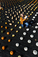 BNPS.co.uk (01202 558833)<br /> Pic: ZacharyCulpin/BNPS<br /> <br /> A geometric, colourful, autumn, harvest at Forde Abbey in Dorset.<br /> <br /> Pictured: Gardener, Johanna Witts with a 'Crown Prince' pumpkin.<br /> <br /> The autumn harvest, of squashes and pumpkins was laid out in a perfect uniform grid for visitors at the Forde Abbey Monastery on the Dorset/Somerset boarder.<br /> <br /> Forde Abbey is a former Cistercian monastery dating back to the early 12th century