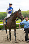 2011 05 14: Alternation with Ramon Dominguez return from winning the Grade 2 Peter Pan Stakes for 3 year olds at 1 1/8 mile, Belmont Park. Trainer Donnie Von Hemel. Owner Pin Oak Stable
