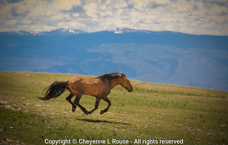 This intruding Stallion is in the process of getting chased off - he can't get away fast enough.<br />