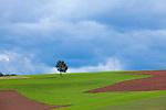 Europa, DEU, Deutschland, Hessen, Burgwald, Gemuenden (Wohra), Agrarlandschaft, Wolken, Feld, Acker, Baum, , Kategorien und Themen, Natur, Umwelt, Landschaft, Jahreszeiten, Stimmungen, Landschaftsfotografie, Landschaften, Landschaftsphoto, Landschaftsphotographie, Wetter, Himmel, Wolken, Wolkenkunde, Wetterbeobachtung, Wetterelemente, Wetterlage, Wetterkunde, Witterung, Witterungsbedingungen, Wettererscheinungen, Meteorologie, Bauernregeln, Wettervorhersage, Wolkenfotografie, Wetterphaenomene, Wolkenklassifikation, Wolkenbilder, Wolkenfoto<br /> <br /> [Fuer die Nutzung gelten die jeweils gueltigen Allgemeinen Liefer-und Geschaeftsbedingungen. Nutzung nur gegen Verwendungsmeldung und Nachweis. Download der AGB unter http://www.image-box.com oder werden auf Anfrage zugesendet. Freigabe ist vorher erforderlich. Jede Nutzung des Fotos ist honorarpflichtig gemaess derzeit gueltiger MFM Liste - Kontakt, Uwe Schmid-Fotografie, Duisburg, Tel. (+49).2065.677997, archiv@image-box.com, www.image-box.com]