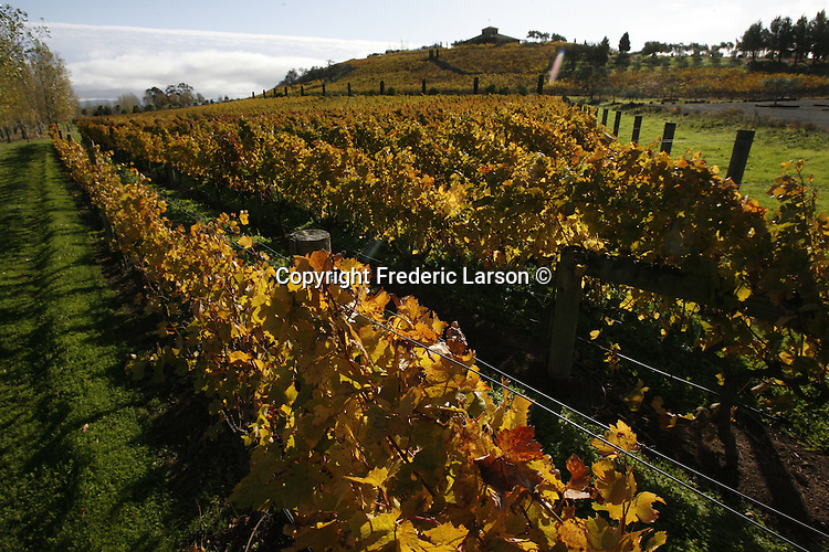 The vineyard of Napa Valley, California.