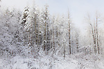 A snowy day at Beaver Brook Preserve, Hollis, NH, USA