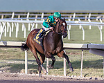 HALLANDALE BEACH, FL - JAN 06: Mask #6 with Javier Castellano in the irons heads for home on the way to winning The $100,000 Mucho Macho Man Stakes for trainer Chad C. Brown at Gulfstream Park on January 6, 2018 in Hallandale Beach, Florida. (Photo by Bob Aaron/Eclipse Sportswire/Getty Images)