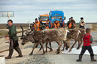 Bovanenkovo ,Yamal Peninsula, Russia, 09/07/2010..Gazprom workers watch while Nenets sledges and reindeer use insulation material to cross a new Gazprom built road while heading north to the Russian Arctic coast. The Nenets had previously been unable to follow their traditional migration routes because new roads constructed by Gazprom damage the sledges.