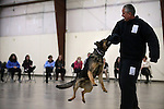 Fallon Pauite Shoshone Tribal Police Officer Jon Tripp and his K-9 partner Bimbo demonstrate patrol skills with volunteer Bruce Huff for a group of GATE students from Carson Middle and Eagle Valley Middle schools, on Wednesday, March 5, 2014 at Fuji Park.<br /> Photo by Cathleen Allison/Nevada Photo Source
