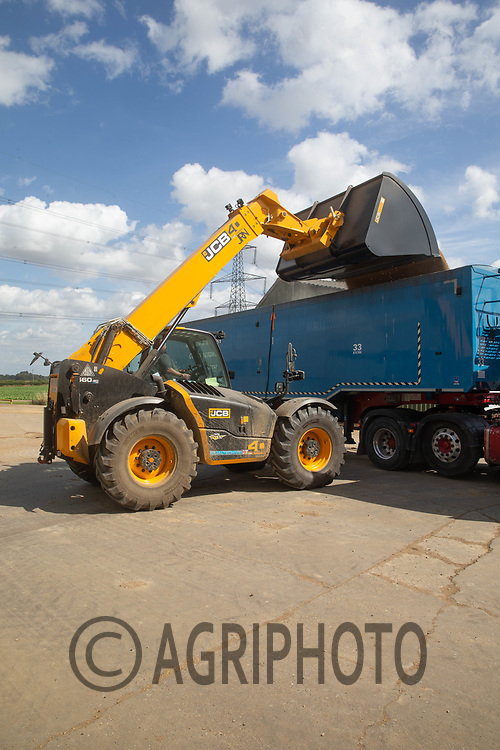 13-8-2021 Loading a lorry with feed wheat <br /> ©Tim Scrivener Photographer 07850 303986<br />      ....Covering Agriculture In The UK....