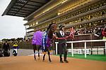 FUCHU,JAPAN-NOVEMBER 18: Wagnerian,ridden by Yuichi Fukunaga, after winning the Tokyo Sports Hai Nisai Stakes at Tokyo Racecourse on Nobember 18,2017 in Fuchu,Tokyo,Japan (Photo by Kaz Ishida/Eclipse Sportswire/Getty Images)
