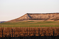 the vineyard Bodegas Concejo (previously called Pilcar), DO Cigales , Valoria la Buena spain castile and leon