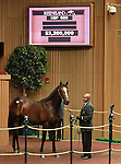 September 11, 2014: Hip #680 War Front - Gold Vault colt consigned by Claiborne Farm, sold for $2,200,000  at the Keeneland September Yearling Sale.   Candice Chavez/ESW/CSM