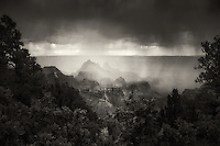 Rain storm. Bright Angel Point, North Rim. Grand Canyon National Park.