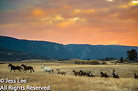 sunrise run Cowboys working and playing. Cowboy Cowboy Photo Cowboy, Cowboy and Cowgirl photographs of western ranches working with horses and cattle by western cowboy photographer Jess Lee. Photographing ranches big and small in Wyoming,Montana,Idaho,Oregon,Colorado,Nevada,Arizona,Utah,New Mexico. Fine Art Limited Edition Photography Of American Cowboys and Cowgirls by Jess Lee