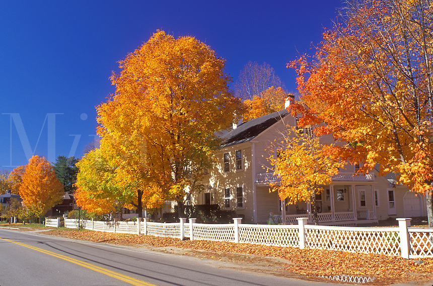 maple tree, fall, Hancock, NH, New Hampshire, Colorful maple trees surround a house with a white fence along a road in the town of Hancock in the autumn.