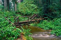 Bridge over Prairie Creek<br /> Prairie Creek Trail<br /> Prairie Creek Redwoods State Park<br /> Humboldt County,  California