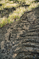 Rock petroglyhs. Hawaii, The Big Island.