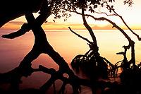 sunrise through mangroves, Papua New Guinea, Pacific Ocean