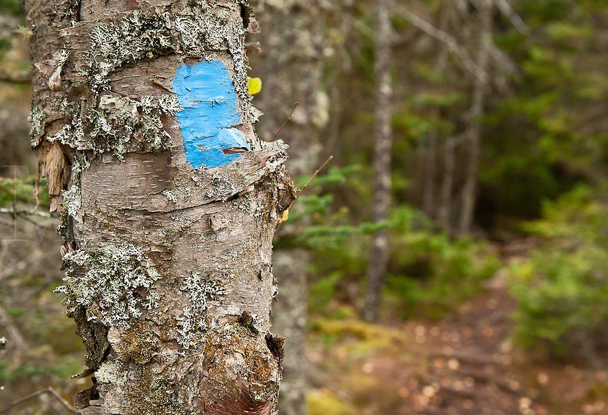 Hiking trail marker, Maine, USA