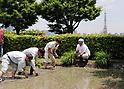 Roppongi Hills Tokyo rooftop rice field
