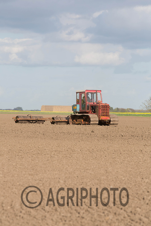 Classic International  TD8 crawler rolling land in dry conditions before drilling sugar beet.<br /> Picture Tim Scrivener 07850 303986
