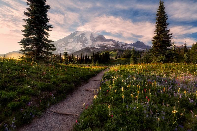 Wildflowers, trail, Mt. Rainier and fog. Mt. Rainier National Park, Waqshington