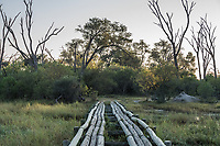 Africa, Botswana, Okavango Delta, Khwai private reserve. Bridge tracks.