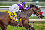 HALLANDALE BEACH, FLORIDA - APRIL 2:  Nyquist #4, ridden by Jockey Mario Gutierrez, coming down the final stretch, and eventually winning the Florida Derby at Gulfstream Park on April 2, 2016 in Hallandale Beach, Florida (photo by Douglas DeFelice/Eclipse Sportswire/Getty Images)