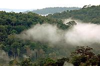 Entorno preservado de floresta amazônica próximo a floresta de Eucalipto,  gênero de arbustos ou árvores de grande porte, da família das mirtáceas, usado  para plantio de extensas áreas de espécie para posterior produção de de papel e celulose  (grupo Orsa).<br />A fábrica da Jarí em local próximo,  onde é beneficiada a madeira, foi construída em cima de uma balsa e trazida por empurradores do Japão no final da década de 70 e instalada as margens do rio Jarí, fronteira do Pará com o Amapá.<br />Almeirim, Pará, Brasil.<br />Foto Paulo Santos/Interfoto<br />03/2005.