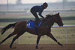 DUBAI,UNITED ARAB EMIRATES-MARCH 23: Ross,trained by Peter Schiergen,exercises in preparation for the Godolphin Mile at Meydan Racecourse on March 23,2017 in Dubai,United Arab Emirates (Photo by Kaz Ishida/Eclipse Sportswire/Getty Images)