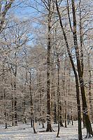 Winterwald, Wald im Winter bei Schnee und Reif, Laubwald, Eichen-Buchen-Hochwald, forest in winter with snow and frost