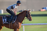 MEYDAN,DUBAI-MARCH 25: Bel Canto ,trained by Koichi Tsunoda,exercises in preparation for the Al Quoz Sprint at Meydan Racecourse on March 25,2016 in Meydan,Dubai (Photo by Kaz Ishida)