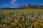 Wildflowers at Chautauqua Park, Boulder,