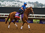DEL MAR, CA - OCTOBER 29: Wuheida, owned by Godolphin Stable Lessee and trained by Charlie Appleby, exercises in preparation for Breeders' Cup Filly & Mare Turf at Del Mar Thoroughbred Club on October 29, 2017 in Del Mar, California. (Photo by Anna Purdy/Eclipse Sportswire/Breeders Cup)