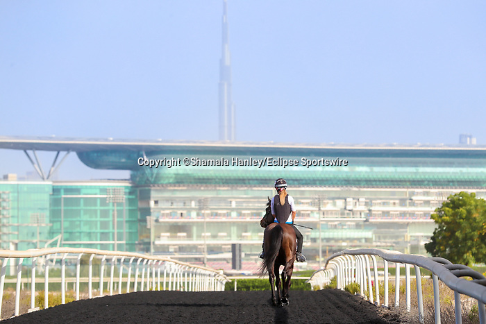 March 25, 2021: Al Quoz Sprint contender Moss Gill (IRE) trains on the track for trainer Edward Bethell at Meydan Racecourse, Dubai, UAE.<br />