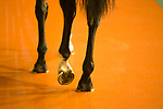 HAPPY VALLEY,WAN CHAI,HONG KONG-APRIL 26: Horses are  walking at the padock  at Happy Valley Racecourse on April 26,2017 in Happy Valley,Wan Chai,Hong Kong (Photo by Kaz Ishida/Eclipse Sportswire/Getty Images)