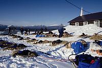 Sorlie, Buser, & Baker Dog Teams Rest at Ruby