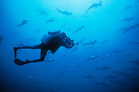scalloped hammerhead sharks, Sphyrna lewini, and rebreather diver, Mexico, Pacific Ocean