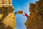 Workers toss straw bales to one another by Ngoc Diem