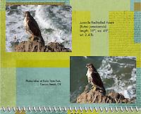 June 2011 Birds of a Feather Calendar