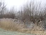 Europa, DEU, Deutschland, Nordrhein Westfalen, Niederrhein, Rheinland, Krefeld, Naturschutzbebiet Riethbenden, Typische Landschaft, Kategorien und Themen, Natur, Umwelt, Landschaft, Landschaftsfotos, Landschaftsfotografie, Landschaftsfoto, Naturschutz, Naturschutzgebiete, Landschaftsschutz, Biotop, Biotope, Landschaftsschutzgebiete, Landschaftsschutzgebiet, Oekologie, Oekologisch, Typisch, Landschaftstypisch, Landschaftspflege......[Fuer die Nutzung gelten die jeweils gueltigen Allgemeinen Liefer-und Geschaeftsbedingungen. Nutzung nur gegen Verwendungsmeldung und Nachweis. Download der AGB unter http://www.image-box.com oder werden auf Anfrage zugesendet. Freigabe ist vorher erforderlich. Jede Nutzung des Fotos ist honorarpflichtig gemaess derzeit gueltiger MFM Liste - Kontakt, Uwe Schmid-Fotografie, Duisburg, Tel. (+49).2065.677997, schmid.uwe@onlinehome.de, www.image-box.com]