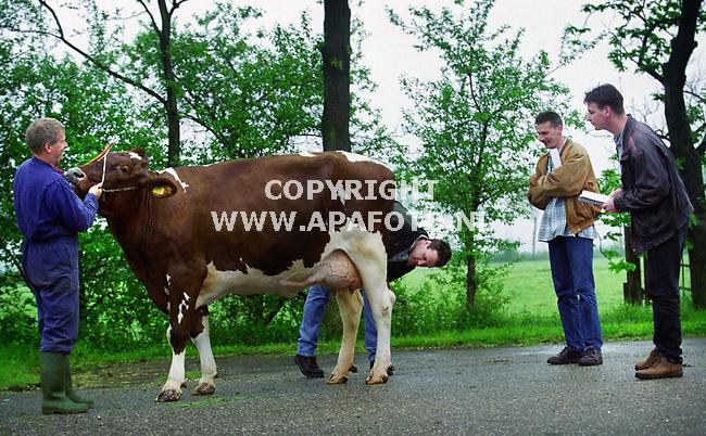 Gendringen , 030500  Foto : Koos Groenewold / APA <br />De keurmeesters keuren de koe Anneke 46 ( vader Beverlake Nick ) van boer Han Wentink ( blauwe overal)<br /><br />vlnr : Arnold van Dee , Dinand Lutke Willink en Robert Overvelde.