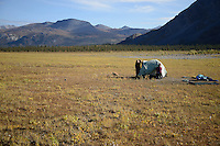 Cathy Hart and Eric Downey set up their tent in the shadow of the Brooks Range near Ambresvajun (Last) Lake, before floating the Sheenjek River in the Arctic National Wildlife Refuge in late August. MR