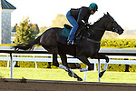 October 16, 2015:  Frivolous works in preparation for the Breeder's Cup Distaff.   Candice Chavez/ESW/CSM