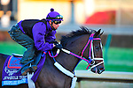 November 2, 2011: Shkspeare Shaliyah, trained by Doodnauth Shivmangal and to be ridden by Alex Solis exercises in preparation for the 2011 Breeders' Cup at Churchill Downs on November 2, 2011.